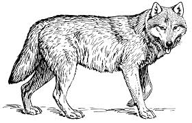 file wolf psf png wikimedia commons