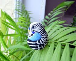 312 best for budgie and parakeet images on