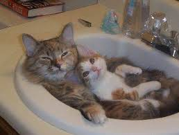 Cat In Bathtub The Cat Bath All About Cats All About Cats Cats