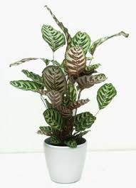 Indoor House Plants Low Light 11 Easy To Grow Houseplants Houseplant Houseplants And Plants
