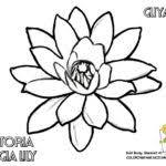 printable lily pad coloring pages frog gekimoe u2022 47905