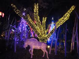 zoo lights houston prices the katy texas blog