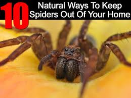 10 natural ways to keep spiders out of your home ohsimply com