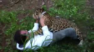 jaguar jaguar attack youtube