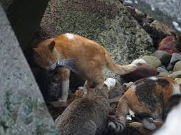 this island in japan is home to more cats than humans and it u0027s