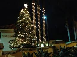 lighted palm christmas tree light photo gallery