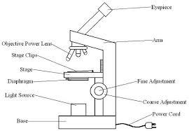 compound light microscope function microscopy