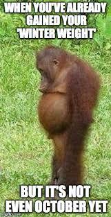 Chubby Meme - chubby orangutan latest memes imgflip