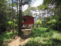 Shack by File Shack In Forest Alto Quepos Mountains Southern Costa Rica