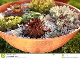 Succulent Rock Garden by Small Rock Garden Stock Photo Image 14910660