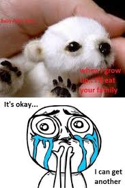 Polar Bear Meme - baby polar bear will eat your family