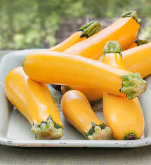 easy pick gold zucchini compact plants fast growing