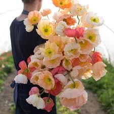 Cut Flower Garden by Iceland Poppies Sherbet Mix Hardy Perennials Cut Flowers And