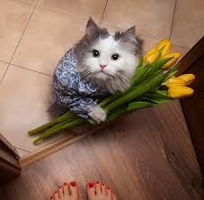 flowers for you madam rebrn com