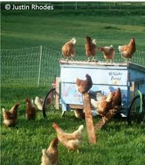 Backyard Chicken Farming by Humane Sustainable Chicken Farming A New Tool For Newbies