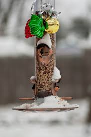 Outdoor Christmas Tree Decorations For Birds by Altogether Christmas Decorating Outdoor Christmas Decorating