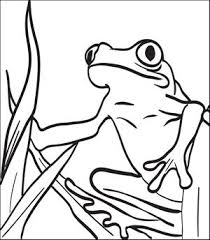 free frogs coloring pages kids printable coloring sheets