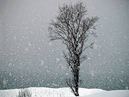 picture of snow falling and a lonely tree in northern