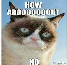Grumpy Cat No Meme - grumpy cat meme 16