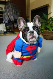 diy dog halloween costume 103 best halloween for dogs cats images on pinterest pet