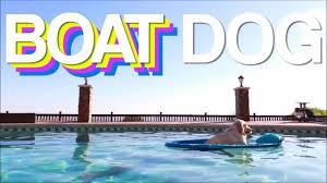 Boat Meme - funny boat dog meme comp youtube