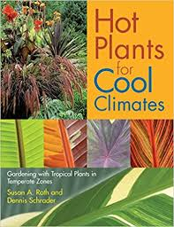 Tropical Plants Pictures - plants for cool climates gardening wth tropical plants in