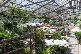Flower Shops by Five Boston Flower Shops To Order From This Mother U0027s Day
