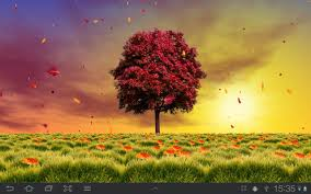 autumn trees live wallpaper android apps on google play