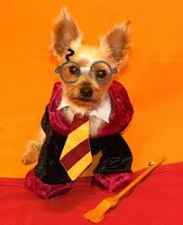 Halloween Costumes Dogs Cutest Puppy Costumes 2011 141 Costume Images Animals Costumes