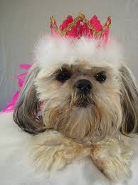 how to make royal princess or prince crown top hats for dogs