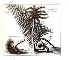 botanical u2013 trees leaves vintage printable at swivelchair media