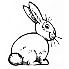 coloring impressive rabbit drawing easy 06 coloring