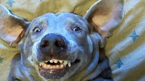 Funny Dog Face Meme - f n with the dog more funny dog memes in motion youtube