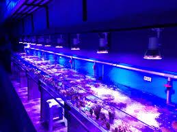 Cool Led Lights by Led Lighting Endearing Marine Aquarium Led Lights Australia