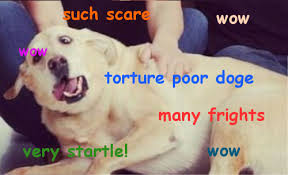 Lost Doge Meme - dun abuse poor doge 106711928 added by dashgamer at lost doge