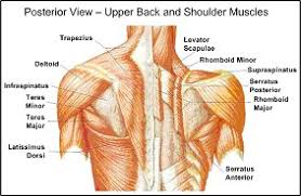 best shoulder exercises for you