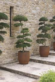 the 25 best trees in pots ideas on potted trees