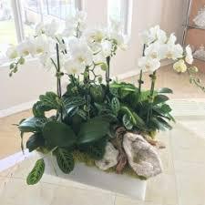 Orchid Delivery Burbank Ca Flower Delivery Le Jardin Privé