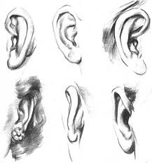 how to draw ears all about ears pinterest drawings people