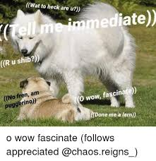 Memes Wat - wat to heck are u wat to heck are u immediate r u shib no fren