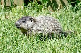 baby groundhog dan u0026 sherree u0026 patrick