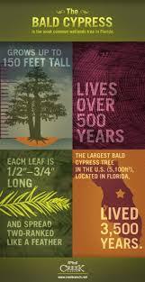 plants native to utah 14 best trees to plant in utah images on pinterest utah plant