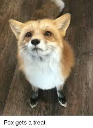 Fox Meme - fox gets a treat fox meme on astrologymemes com