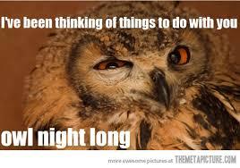 Funny Owl Meme - seductive owl the meta picture