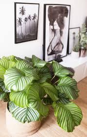 Wohnzimmer Einrichten Pflanzen Die Besten 25 Pflegeleichte Zimmerpflanzen Ideen Auf Pinterest