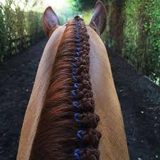 hairstyles for horses beautiful horse hairstyles cowboy magic cowboy magic