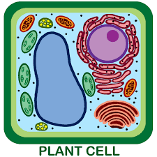 plant cell model on emaze