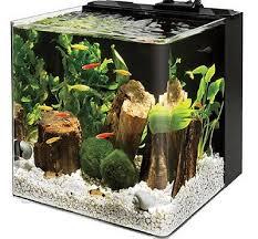 aquarium to terrarium page 4 fallcreekonline org