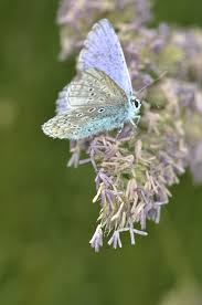 purple white butterfly on purple petaled flower during daytime