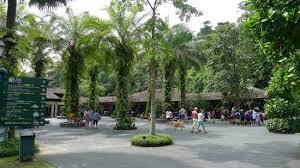 Singapore Botanic Gardens Location Singapore Botanic Gardens Palm Valley Picture Of Singapore